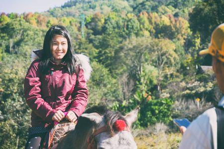 Brown pony met zadel staan ??in park met natuurlijke achtergrond in vintage stijl