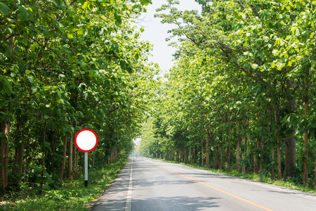 blank street sign on street with teak forest