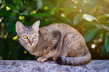 siamese cat in garden squinting at people Stock Photo