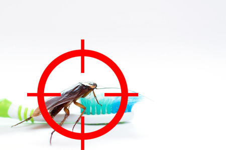 drawing gun target to kill cockroach ,conkroach on toothbrush, pest control concept Foto de archivo
