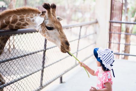 Little child feeding Giraffe long bean at the zoo Standard-Bild - 122017817