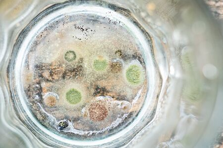 close up of fungus in buttom of glass, dirty concept