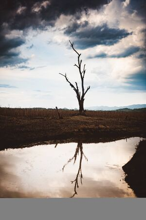 The water in canal is drying and tree is standing dead, Water crisis and Climate change or drought concept.