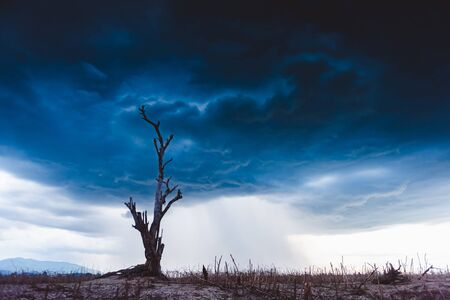 The tree without leaf standing dead on dry ground with stormy cloud background. Global warming crisis,  Economic crisis concept