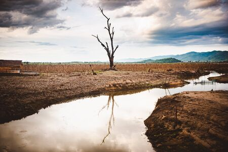 The water in canal is drying and tree is standing dead, Water crisis and Climate change or drought concept. Banco de Imagens