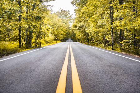 Carretera asfaltada con línea amarilla de buceo y fondo forestal