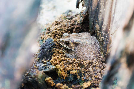 Toad hiding on ground waiting to eat insects