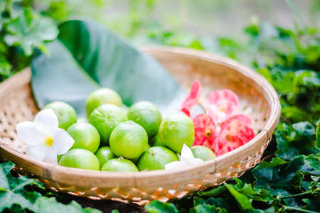 Lime Citrus Fruits In basket