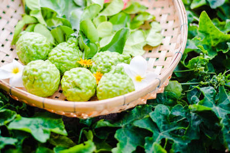 raw fresh bergamot in basket