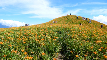 red mountain: Lily Flowers