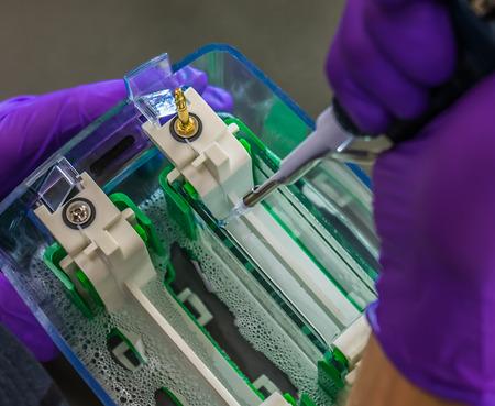 electrophoresis: Pipetting  Stock Photo