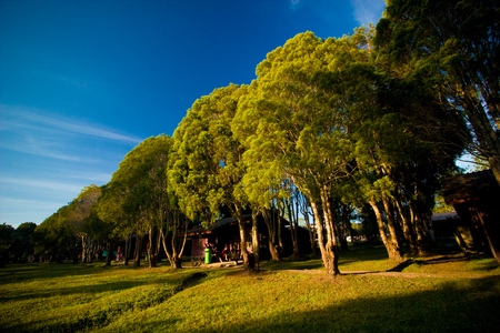 Row of trees with the sunlight in evening and blue sky. Stock Photo