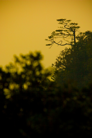 Silhouette forest in sunset at Phukradueng National Park, Thailand. Stock Photo