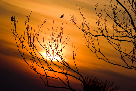 Silhouette of tree branches with sunset sky at Phukradueng National Park, Thailand.