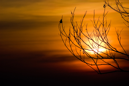 Silhouette of tree branches with sunset sky at Phukradueng National Park Stock Photo