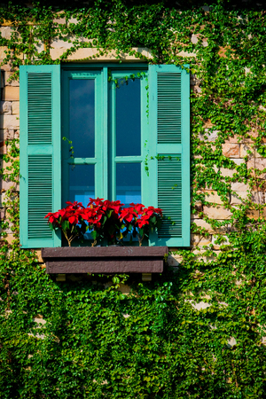 Green colorful wooden window and red flowers surrounded by ivy on the wall.