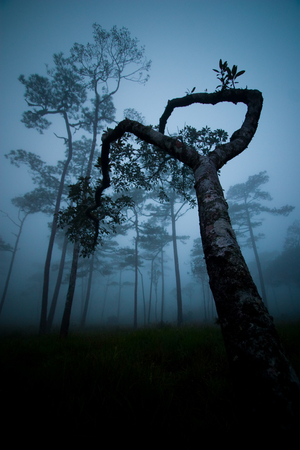 Silhouette forest trees in the morning with the fog Stock Photo