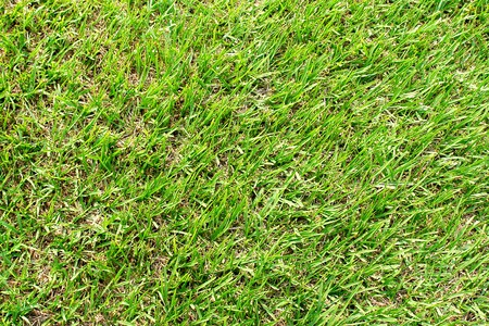 green grass texture on soccer field. photo image photo