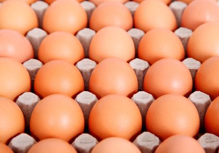 Photographs of eggs in the comb. Food Image photo