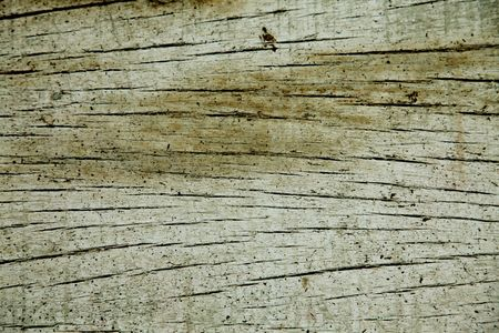 Texture of an old wooden trunk. Natural background photo