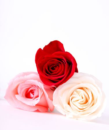 Three roses, red, pink and white colors Stock Photo - 5931453