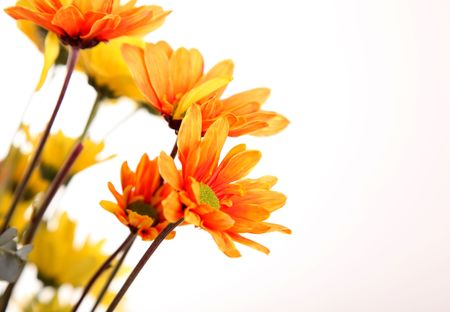 Orange flowers over white background. Space to insert text or design Stock Photo - 6069122