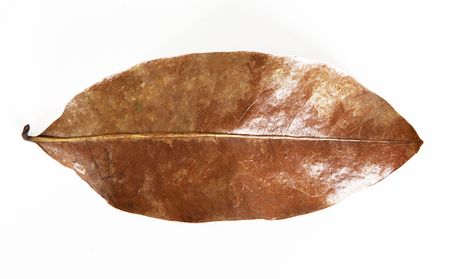 dead leaf: Dry leaf on white background. Nature image Stock Photo