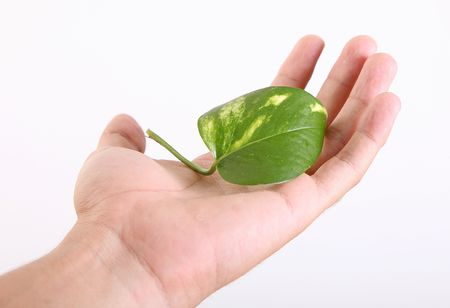 Hand holding green leaf over white background. Nature care Stock Photo - 6268397