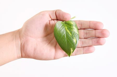 Hand with green generic leaf over white background Stock Photo - 6268428