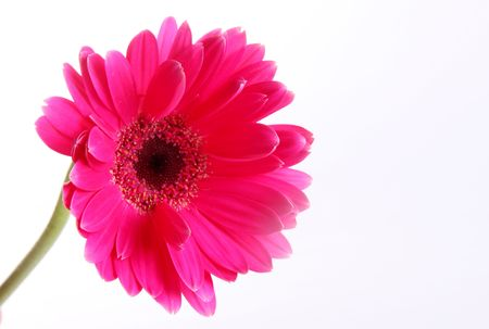 Fuchsia flower over white background. Nature image. Space to insert text or design Stock Photo - 6790508