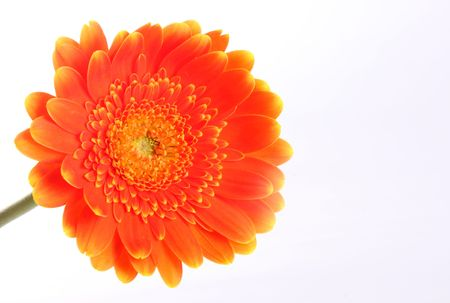 Orange flower over white background. Nature image. Space to insert text or design Stock Photo - 6790501