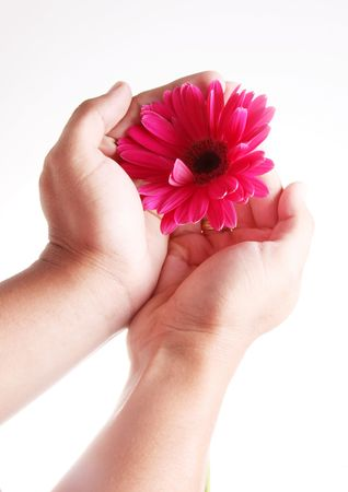 Hand showing a beauty purple flower over white background Stock Photo - 6790514
