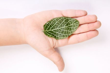 Leaf on child hand over white background. Nature image Stock Photo - 6814980