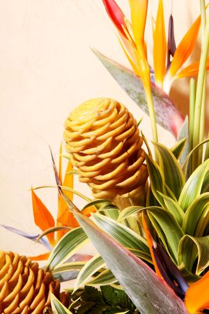 Orange and yellow tropical flowers. Nature colors Stock Photo - 6815092
