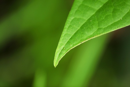 Nature represented in  a leaf hanging over green background Stock Photo - 8912724