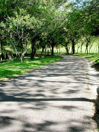 landscape of way whit tree shadows, photo image                               Stock Photo - 9697346
