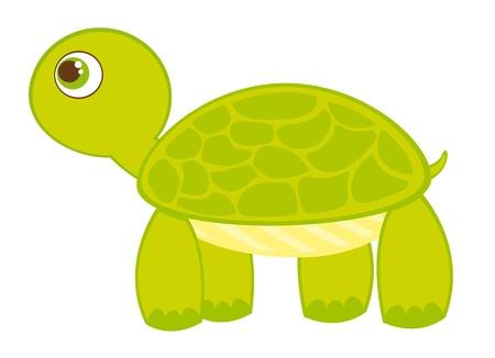 tortue de terre: caricature de tortue isol� sur fond blanc. vecteur