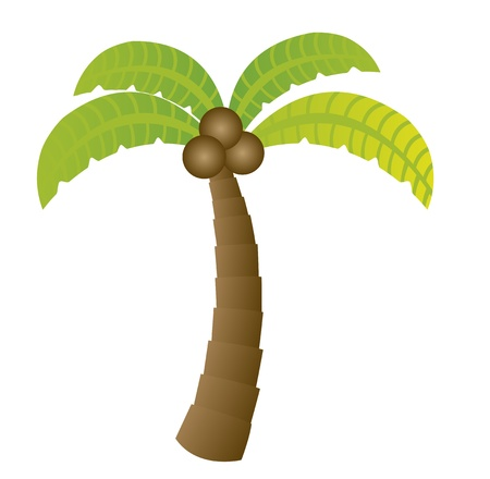 palm tree isolated: palm cartoon isolated over white background. vector
