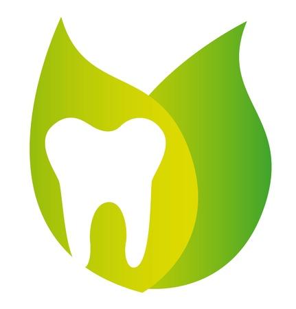 hojas de diente y verdes aisladas sobre fondo blanco. vector