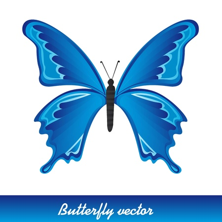 butterfly isolated: blue beautiful butterfly Illustration