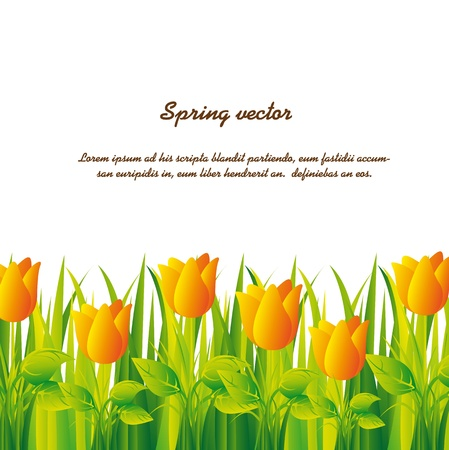 yellow tulips over grass over white background.  Vector