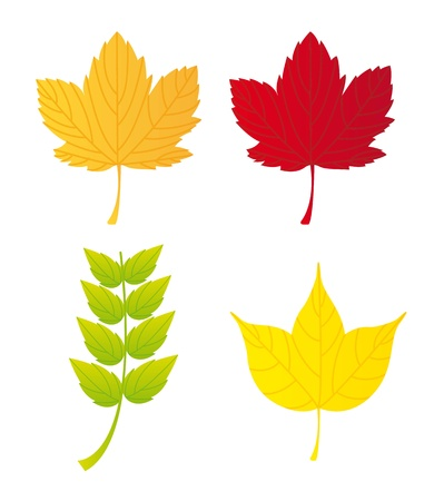 autumn leaves isolated over white background.   Vector