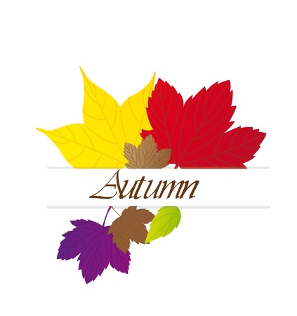 cute autumn leaves  Stock Vector - 13338368