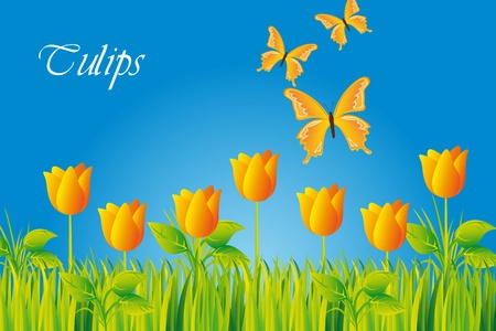 yellow tulips with butterfly over sky. Stock Vector - 13338560