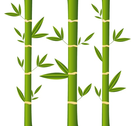 bamboo sticks with leaves over white background. Stock Vector - 13439070