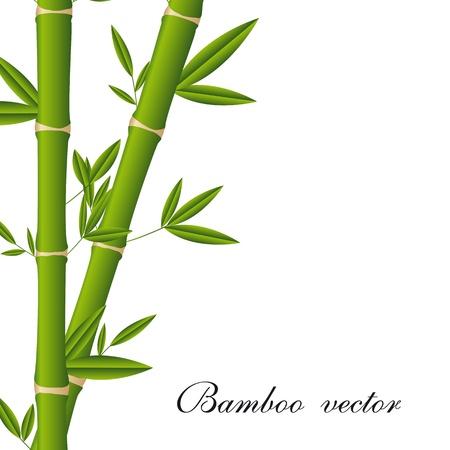 japanese garden: bamboo sticks