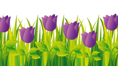 purple tulips with grass over white background.