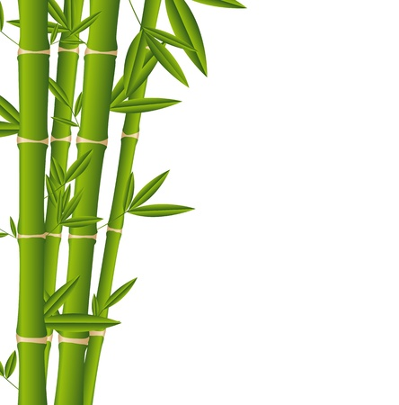 botanical branch: bamboo sticks over white background.