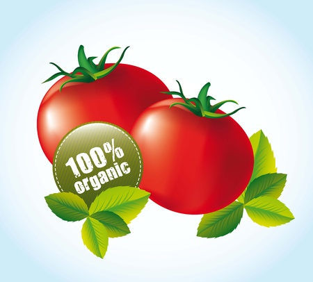 greengrocer: tomato with tags and leaves over blue background. vector illustration