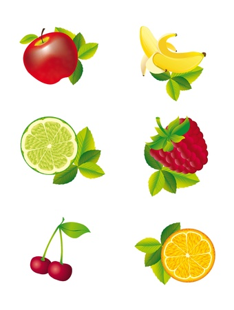 fruited: fruits with leaves isolated over white background. vector illustration Illustration
